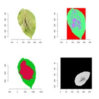 Imagerie multimodale sur foliole de pomme de terre