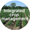 Integreted crop management