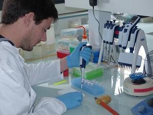 PCR en temps réel détection PVY