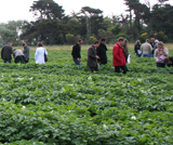 Inspection of seed lots in the national conformity field