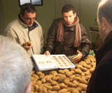 Visual inspection of tuber quality before dispatch