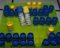 production de kits Elisa pour les principaux virus