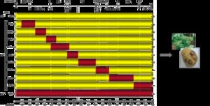 Représentation schématique du génome de virus chimères (PVYN/O)