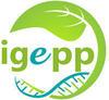 Logo-IGEPP-ECRAN_medium