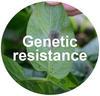 Genetic resistance