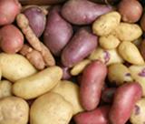 Tubercules de différentes variétés de pomme de terre