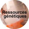 Ressources génétiques
