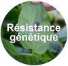 Résistance génétique