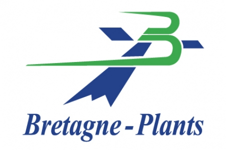 Bretagne Plants